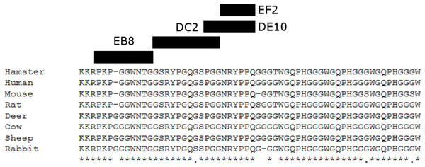 Suggested epitopes for the four monoclonal antibodies based on direct mapping and competitive ELISA assay.