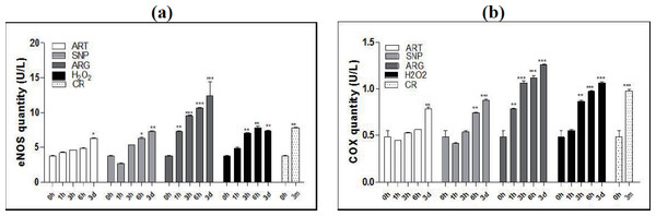 ART, SNP, ARG, or H2O2 mimics CR to increase the quantities of eNOS and COX4 in mouse skeletal muscle cells.