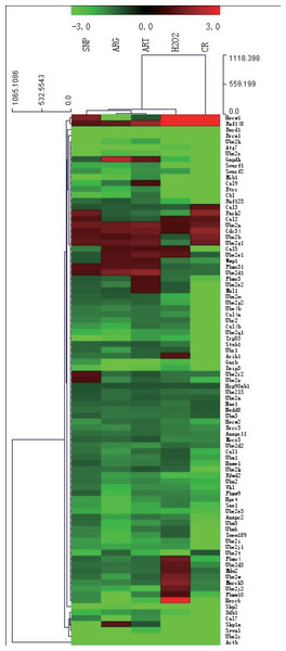 A hierarchical clustering illustration for the up/down-regulation of 84 ubiquitylation genes from RT-PCR array data.
