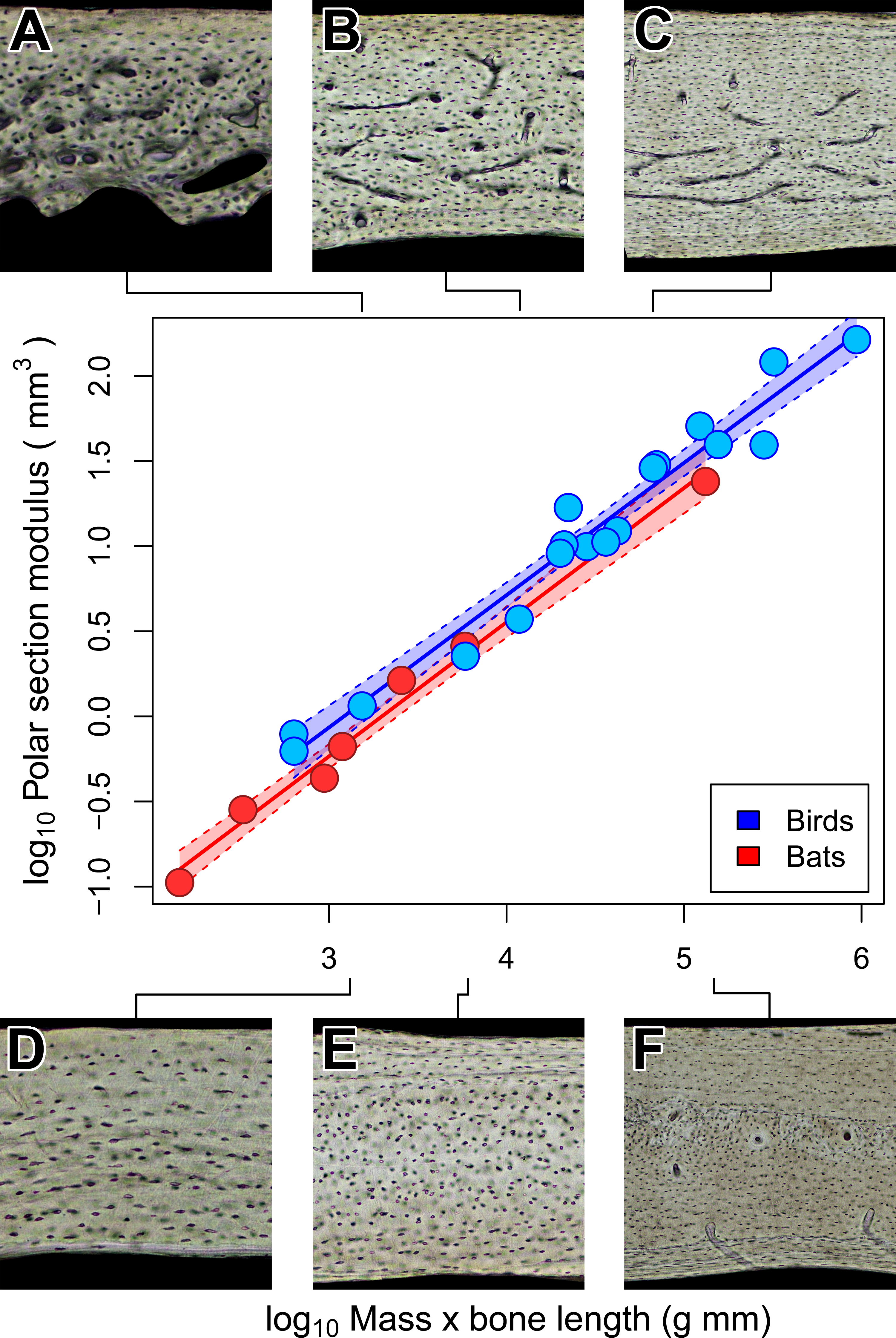 Wing bone laminarity is not an adaptation for torsional resistance ...
