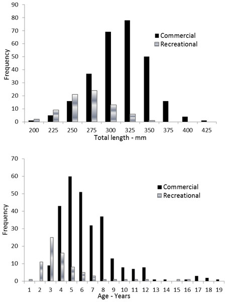 Distributions of (A) length frequency and (B) age frequency, by fishing sector, for aging samples of coney (Cephalopholis fulva) collected from the southeastern United States in 1998–2013.