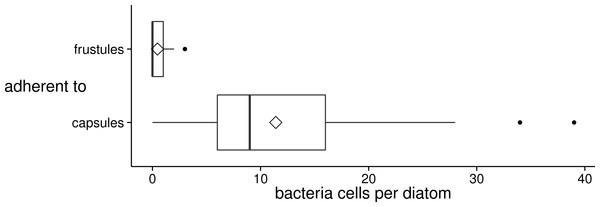 Distribution of the number of bacteria cells adherent to diatom valve faces of different surface types (frustule or capsule) in xenic A. minutissimum biofilms.
