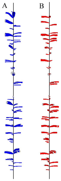 Reconstruction of a 1.5-m section from the base of the second log of tree T04 (i.e., at 2.5 m from the tree base).