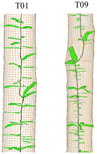3D reconstruction of sections of two stems showing deviation of the pith related to possible stem breakage.