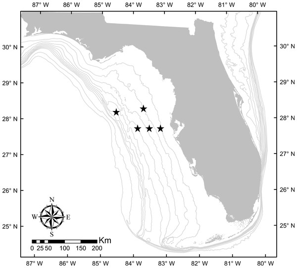 Study region in the eastern Gulf of Mexico where samples were collected (locations of collection sites shown with black stars). 10 m isobaths are shown from 10–100 m.