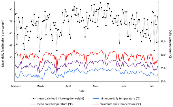 Mean daily food intake (g dry-weight) for three B. variegatus sloths and daily temperature (°C) (minimum in blue, mean in purple and maximum in red) throughout the five month study period.