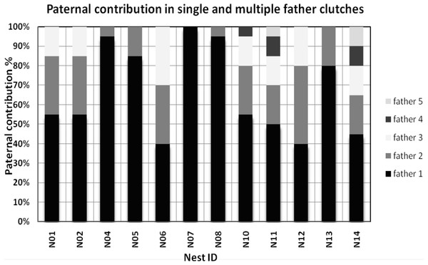 Paternal contribution for all nests having multiple paternity (MP) and single paternity.
