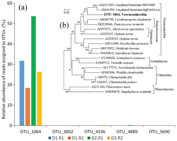 The abundance of OTUs affiliated with the phylum Verrucomicrobia and the phylogenetic relationship of OTU_1064.