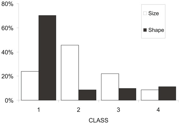 Frequency distribution of sardine swimbladders per size and shape class.