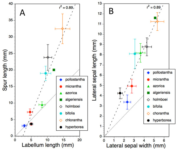Bivariate plot of taxon mean values for (A) labellum length versus spur length and (B) lateral sepal width versus lateral sepal length for Platanthera hyperborea plus seven putative species and two hybrid combinations in Platanthera section Platanthera.