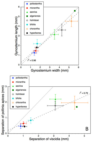 Bivariate plot of taxon mean values for (A) gynostemium width versus gynostemium length and (B) distance separating viscidia versus distance separating pollinarium apices for Platanthera hyperborea plus seven putative species and two hybrid combinations in Platanthera section Platanthera.