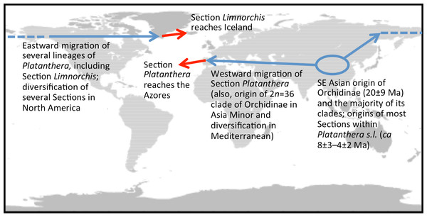 Scenario suggesting how the two most phylogenetically divergent lineages within the genus Platanthera ultimately reached adjacent mid-Atlantic archipelagos by migrating (and evolving) circumboreally but in opposite directions.