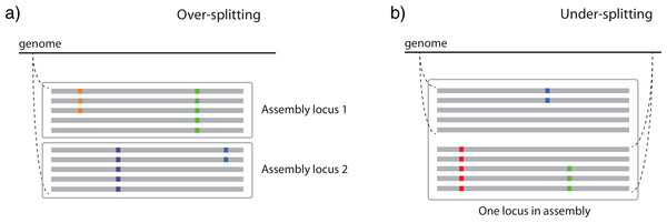 Two ways in which similarity thresholds can result in spurious assemblies.