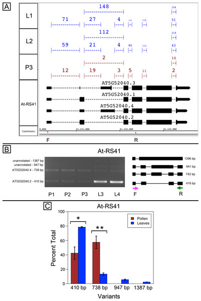 Pollen-specific splicing in At-RS41.