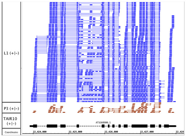 RNA-Seq read alignments indicating that the fourth intron in Arabidopsis U2AF65B is alternatively spliced.