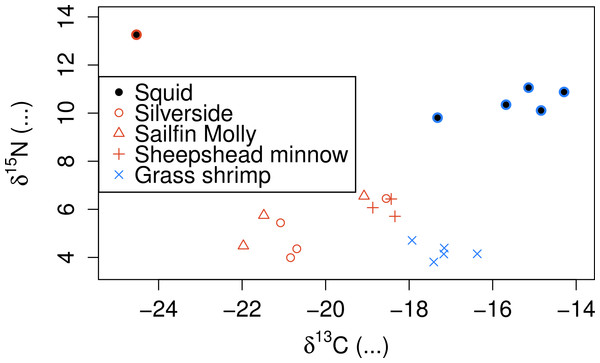 Stable isotope signatures of squid and their potential prey.