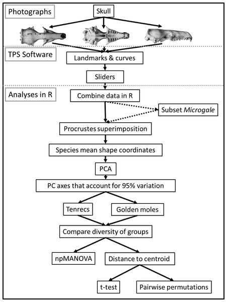 Flowchart diagram of data collection and analysis.