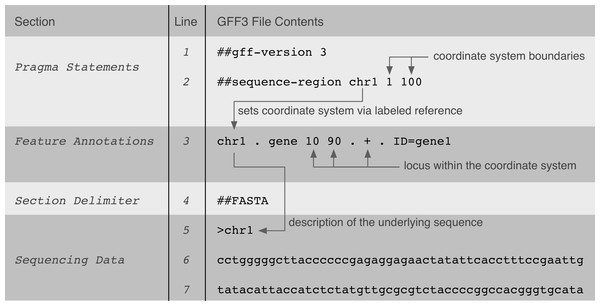 A GFF3 file example that shows the implicit relationships between data in the file and its genomic locus interpretation.