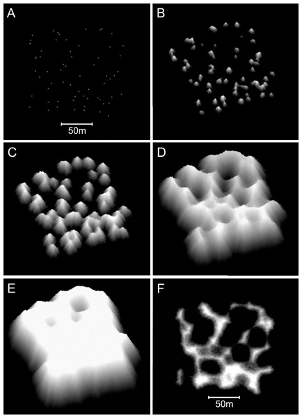 Sequential stages in the development of model branching Acropora reefs.