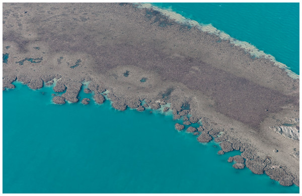 Coalescing nodular patch reefs exposed on a low spring tide at Cockatoo Island in the Buccaneer Archipelago, Western Australia (16°4.8′S 123°35′E).
