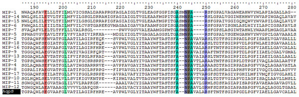 Partial sequence alignment of MIPs encoded by the ars operons with Aqps from Sinorhizobium meliloti SM1021 indicated.