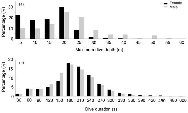 Frequency distribution of the maximum depth and dive duration of U-dives.