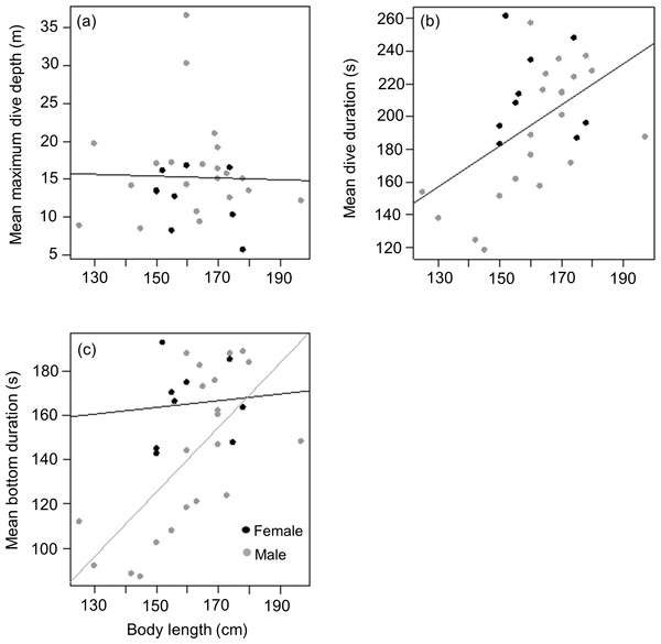 Relationship between (A) mean maximum dive depth (B) mean dive duration and (C) mean bottom duration as a function of body length of female and male harbour seals.
