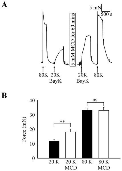 Effect of caveolar disruption with M-β-CD on rat femoral artery contraction.