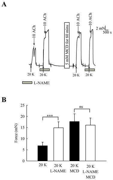 Effect of inhibition of NO synthase by L-NAME.