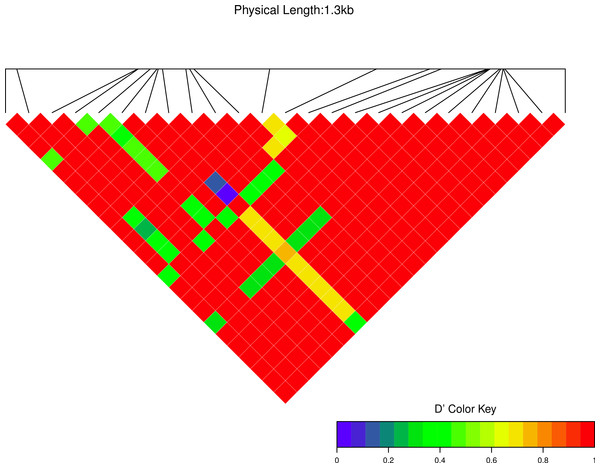 Linkage disequilibrium D′ heatmap of high frequency polymorphic sites for Cath1 in Atlantic cod only.