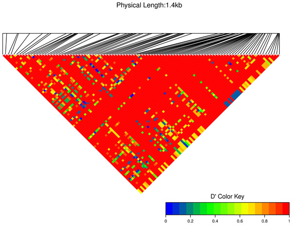 Linkage disequilibrium D′ heatmap of high frequency polymorphic sites for Cath1 and Cath3 combined from all species.