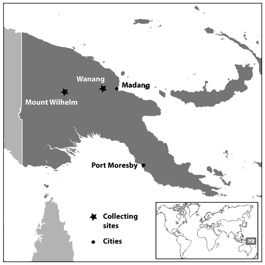 Elevational gradient of hemiptera heteroptera auchenorrhyncha location of collecting sites in papua new guinea sciox Image collections