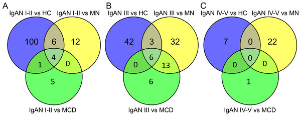 Overlapping relationship of the differentially expressed miRNAs in IgAN subgroups.