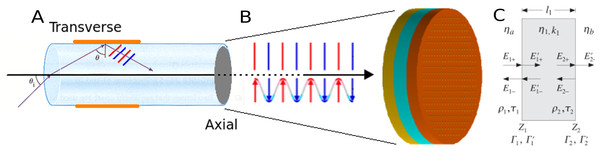 Light propagation in fiber optic biosensor.