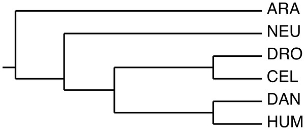 The phylogeny used by the algorithm.