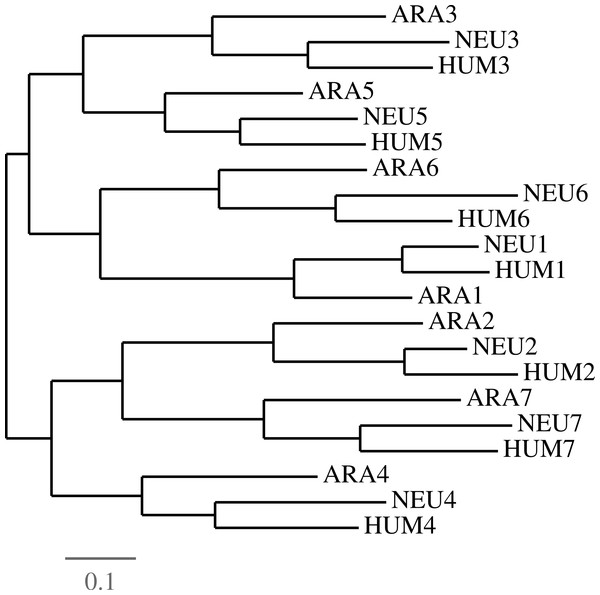 Evidence of duplications followed by speciations.
