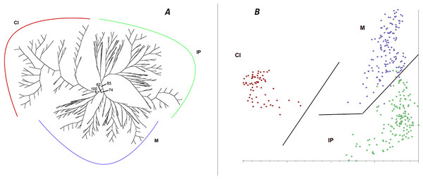 Cluster analysis of genetic diversity, using AFLPs, in Astragalus edulis.