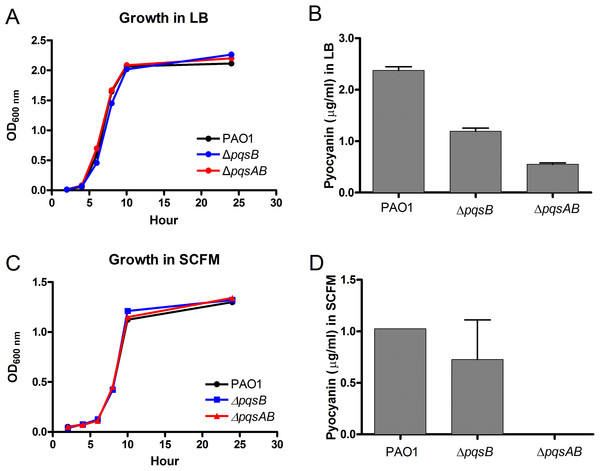 Growth and pyocyanin production by PAO1 and pqs mutants.