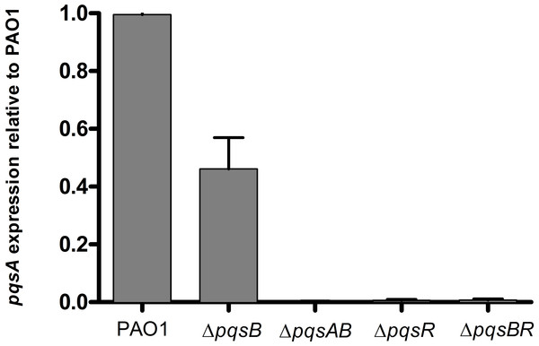 Expression of pqsA in PAO1 and pqs mutants.