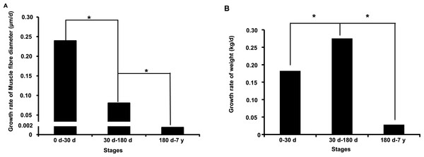 Growth rate of muscle fiber diameter (A) and weight (B) during the postnatal muscle development stage.
