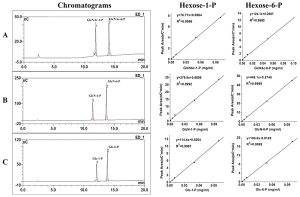 Chromatograms of calibration standards and their standard curves.
