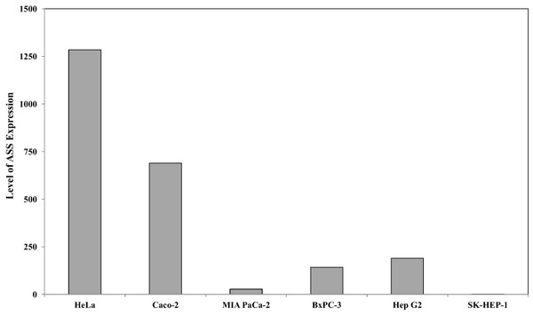 Relative argininosuccinate synthase (ASS) expression in HeLa, Caco-2, MIA PaCa-2, BxPC-3, Hep G2, and SK-HEP-1 in which GAPDH expressions are not significantly changed.