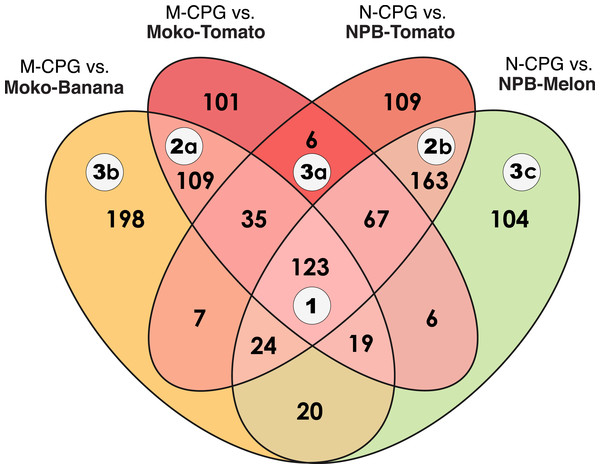 Venn diagram of differentially expressed genes in R. solanacearum strains growing in planta compared to in rich medium.