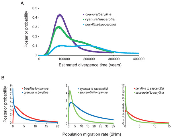 Marginal posterior probability densities for divergence times and migration rates among Amazilia beryllina, A. cyanura, and A. saucerottei using a coalescent approach in IMa and mtDNA.