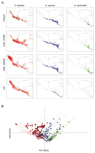 Present and past distribution models and environmental space for Amazilia beryllina, A. cyanura, and A. saucerottei.