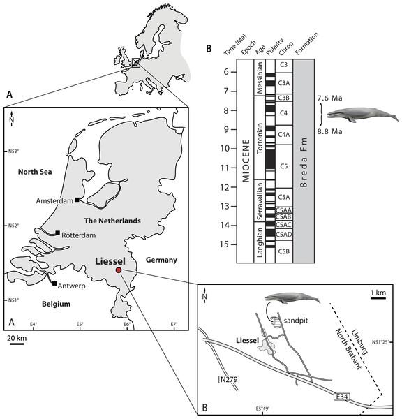 Type locality of Metopocetus hunteri.