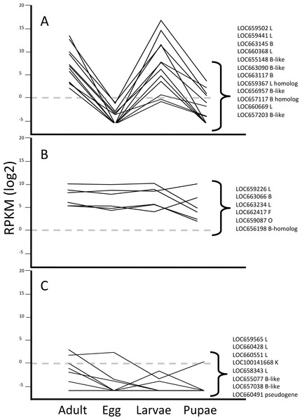 Line graphs grouping data by three different expression patterns of T. castaneum cysteine peptidase genes.