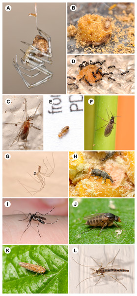 Photographic representatives of the most frequently collected arthropod families.