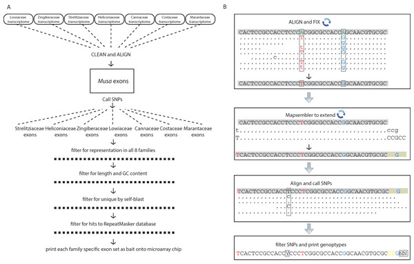 Schematic diagrams for the bioinformatic work flow.
