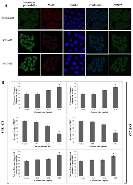 Immunofluorescence study of the effect of PCC.
